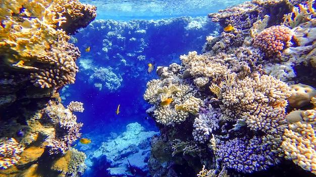 Dwie rafy koralowe, pomiędzy którymi pływają tropikalne ryby