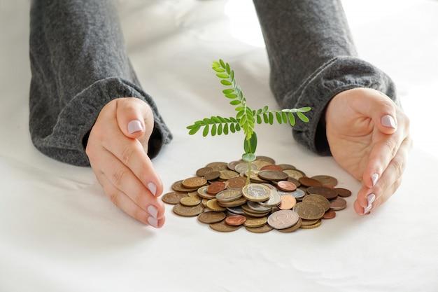 Dwie ręce, które sadzą drzewa na stosie pieniędzy.