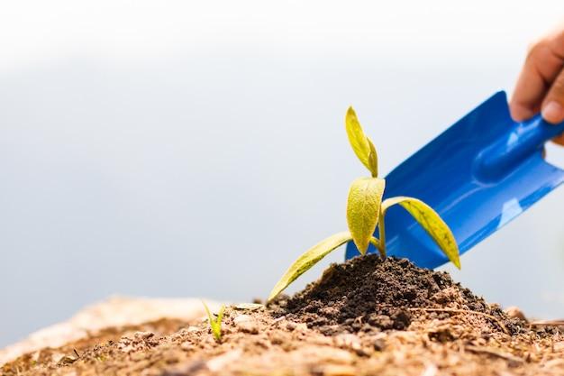 Dwie ręce mężczyzn zasadziły sadzonki w ziemi, aby wyschły.