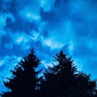 Dwie sosny pod błękitnym nocnym niebem z wieloma gwiazdami