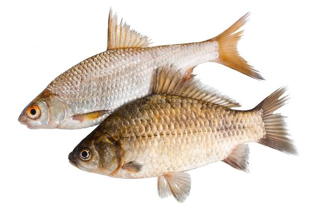 Dwie surowe ryby na białym tle