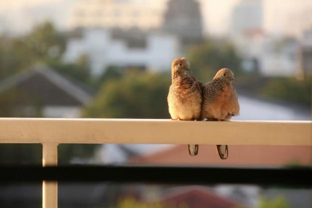 Dwie urocze gołębie siedzą na tarasie budynku w mieście.