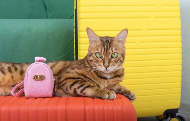 Dwie walizki i kotka z różowym plecakiem w pokoju