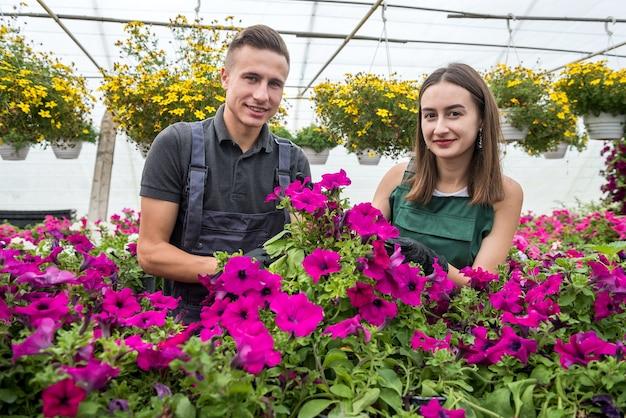 Dwóch szczęśliwych ogrodników w fartuchach pracuje z kwiatami w ogrodzie szklarniowym. wiosna