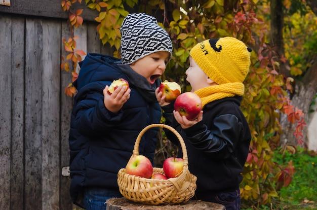 Dwóch uroczych chłopców stoi przy pniu, na którym stoi kosz z jabłkami.
