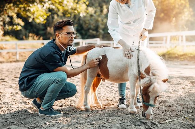Dwóch weterynarzy badających stetoskopem małego i uroczego kucyka.