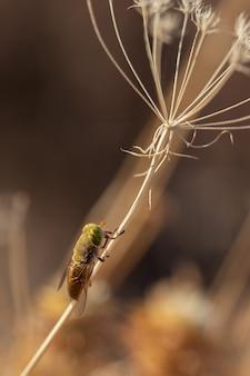Dwuskrzydły. gatunki much fotografowane w ich naturalnym środowisku.