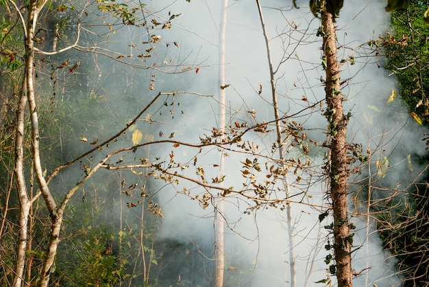 Dym ogień z prerii. sucha trawa płonie wśród krzewów niszcząc lasy