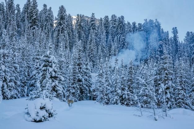 Dym w śnieżnym lesie zimą