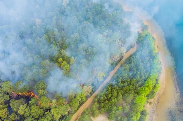 Dym wydobywający się z płonących drzew w lesie