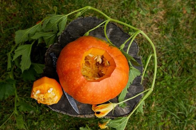 Dynia na pniu w drewnie, ogrodzie, na zewnątrz, w pobliżu noża, przed rzeźbieniem na halloween, przygotowuje jacka o'lantern. ozdoba na imprezę, widok z góry, bliska, widok z góry, miejsce