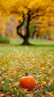 Dynia na trawie z liśćmi w parku