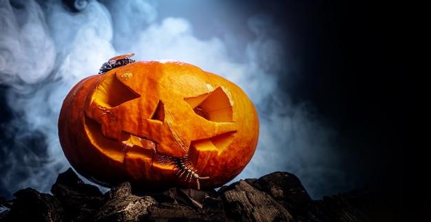 Dynia w kształcie czaszki na halloween
