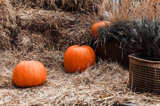 Dynie. wystrój na sezon jesienny