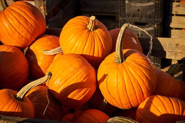 Dynie z bliska na rynku na halloween.