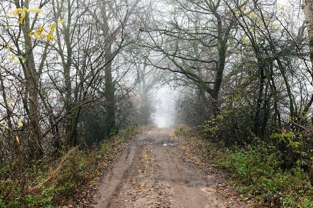 Dystans asfaltową drogą wzdłuż posadzonych drzew, błoto i ślady samochodów, poranny czas mglisty