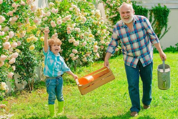 Dziadek i wnuk uprawiają kwiaty