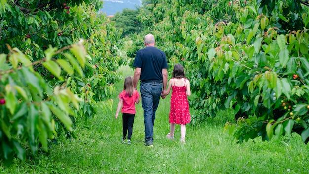 Dziadek spacerujący po sadzie wiśniowym ze swoimi wnuczkami
