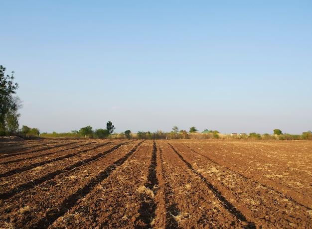 Działki rolnicze i wieczorne niebo.