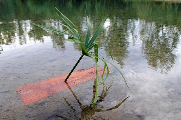 Dzieci łódki takie samotne palmy wyspy