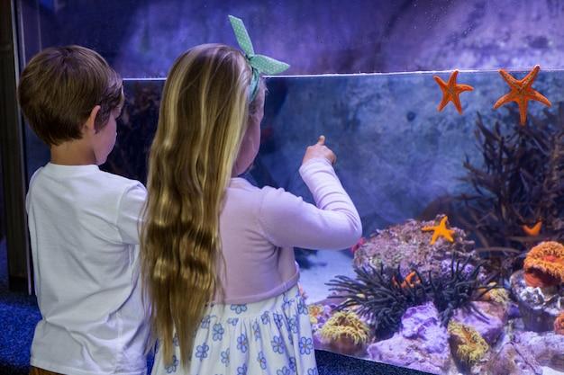 Dzieci patrząc na rozgwiazdy w zbiorniku
