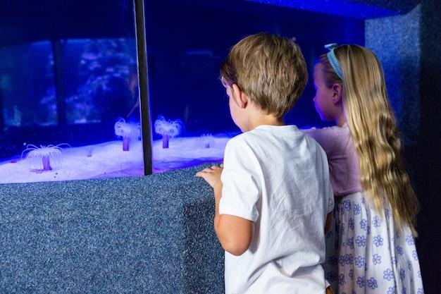 Dzieci patrzeje morskiego anemonu w zbiorniku