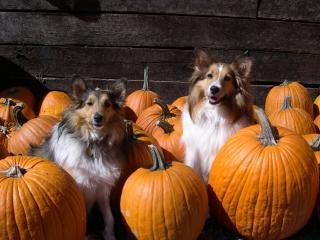 Dzieci pumpkin patch