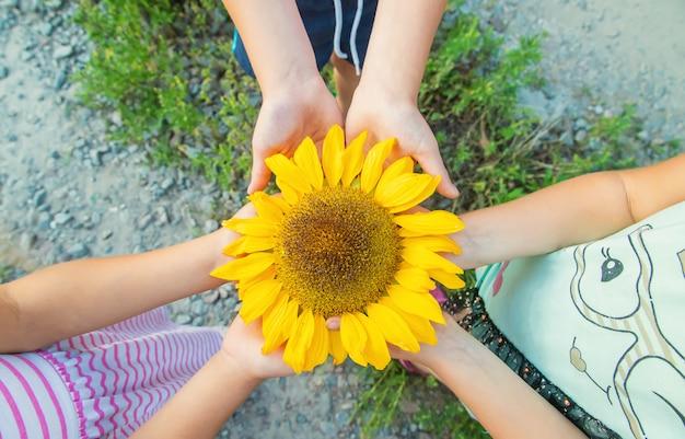 Dzieci trzymają w rękach słonecznik
