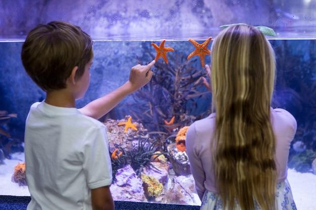 Dzieci wskazując na rozgwiazdy w zbiorniku