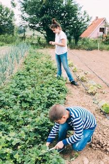 Dzieci zbierające truskawki