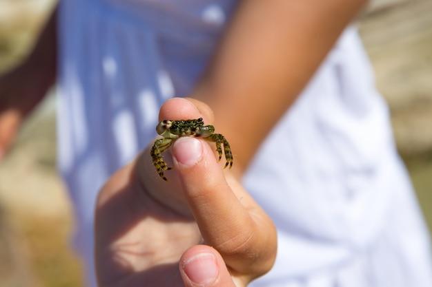 Dzieciak trzyma małego dziecko krab w ręce podczas plaża wakacje