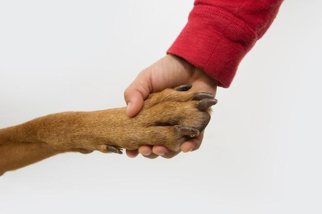 Dziecięca rączka wydrążająca nogę psa. koncepcja przyjaźni i miłości.