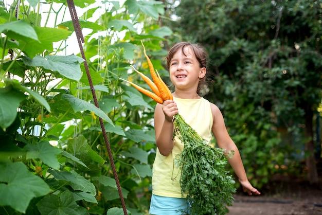 Dziecko dziewczynka szczęśliwie trzymając świeżą marchew do zbioru pomarańczy. koncepcja organicznych warzyw domowych zbiorów marchwi i buraków.