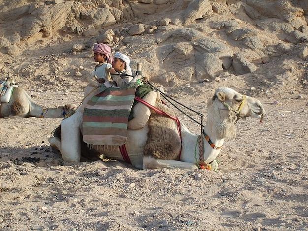 Dziecko egipt gorący góra pustynia wielbłąd hurghada