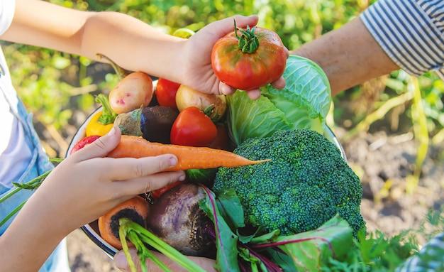 Dziecko i babcia w ogrodzie z warzywami w rękach.