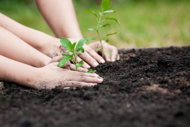 Dziecko i mateczna ręka zasadza młodego drzewa na czerni ziemi wpólnie jako save światu pojęcie