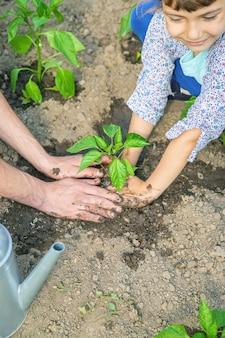 Dziecko i ojciec rośliny w ogrodzie.