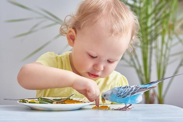 Dziecko i zwierzęta. kręcony maluch karmi papużkę falistą ze swojego talerza