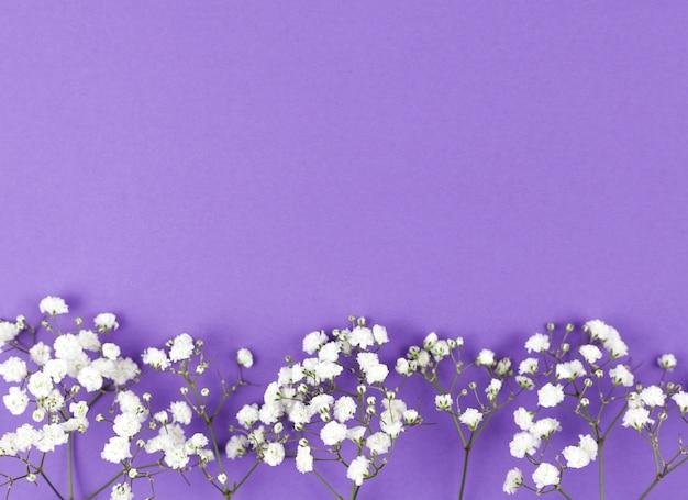 Dziecko oddech kwiat na dole fioletowym tle