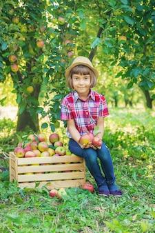 Dziecko podnosi jabłka w ogródzie w ogródzie.