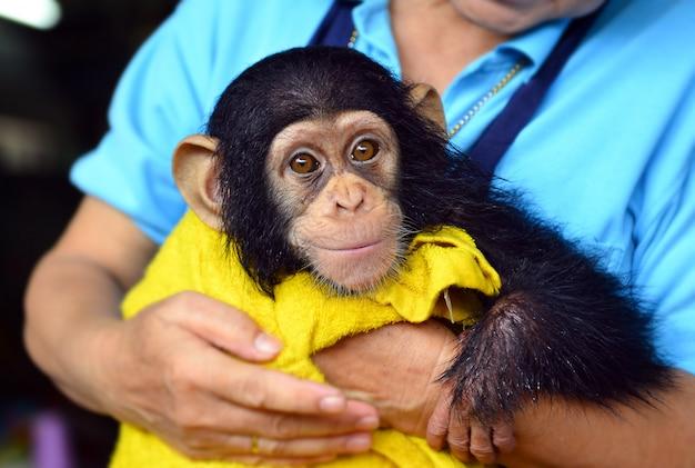 Dziecko szympansa małpa przy zoo.