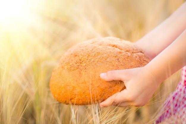 Dziecko trzyma chleb w rękach na żółtym tle pszenicy jesienią. płytka głębia pól