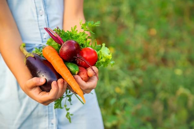 Dziecko trzyma w rękach zbiory warzyw. selektywna ostrość. natura.