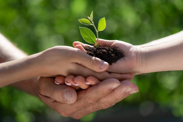 Dziecko trzymając w rękach młodych zielonych roślin