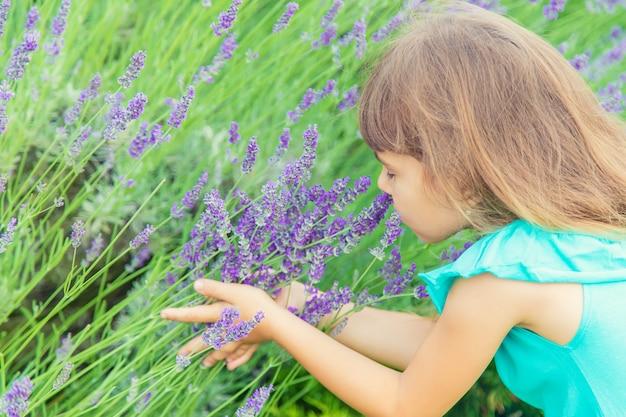 Dziecko w kwitnącym polu lawendy. selektywne skupienie.
