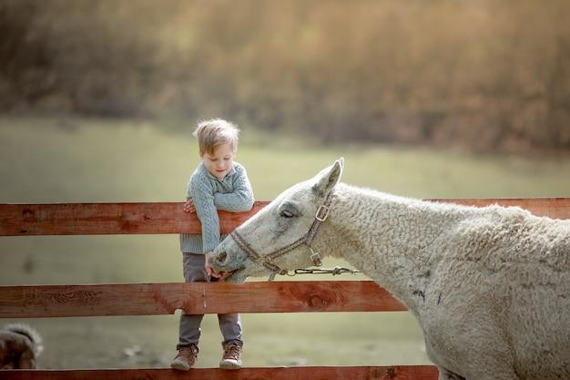 Dziecko w wieku szkolnym na ranczu siedzi na drewnianym płocie i karmi kucyka