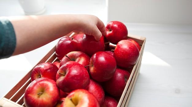 Dziecko wyjmuje soczyste czerwone jabłko z koszyka z jabłkami