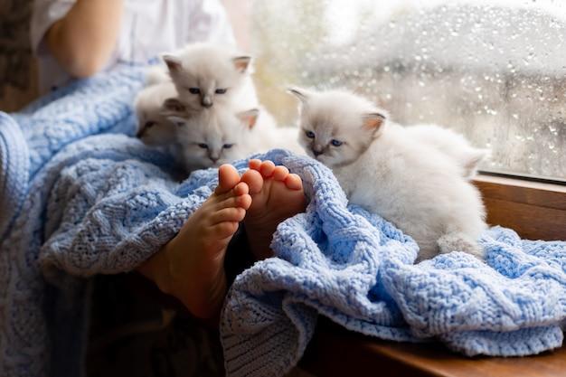 Dziecko z bosymi stopami przykryte niebieskim dzianinowym kocem siedzi na parapecie z białymi kociętami