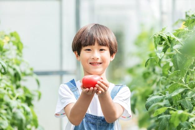 Dziecko z pomidorem, chodzenie w szklarni