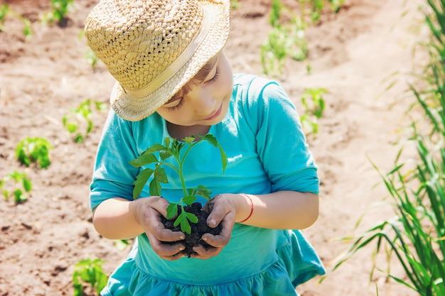 Dziecko zasadza roślinę w ogrodzie. selektywna ostrość.